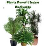 Plants Benefit Air Quality